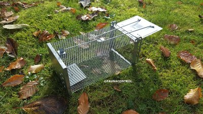 Rattenvangkooi enkele deur verzinkt